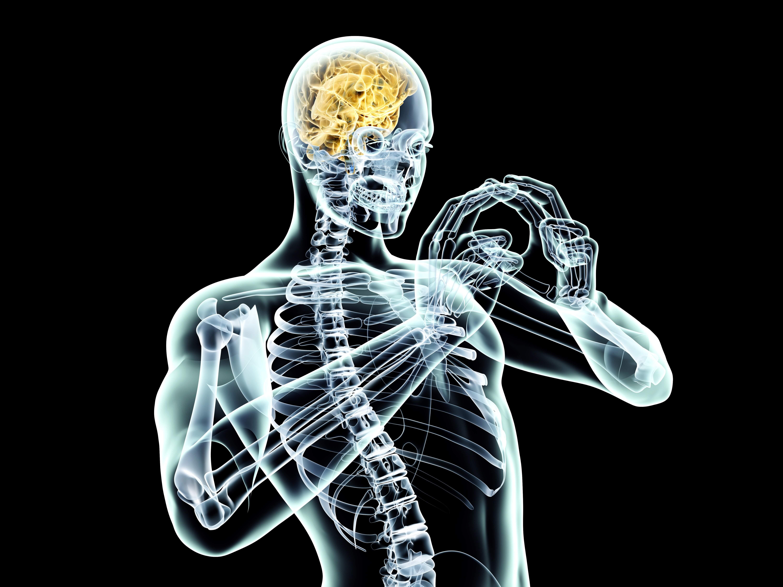 Mózg Szkielet